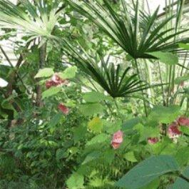 Первый Ботанический сад в России воронеж